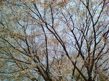 Sakura01_3